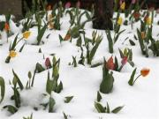 Rare May snowstorm pounds Iowa, Wisconsin and Minnesota