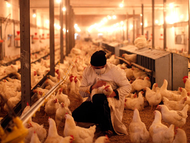 Poultry scare Centre rushes experts to bird fluhit Kerala districts