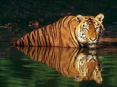No land left for the tiger? Reuters