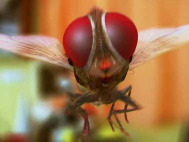 Eega to be screened at Cannes Film Festival