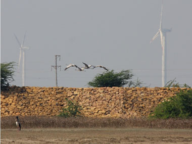 Indias clean energy at the cost of biodiversity