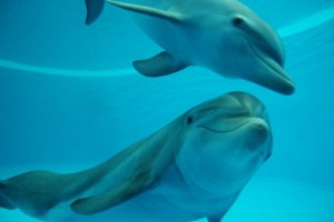 Zoo-Dolphins