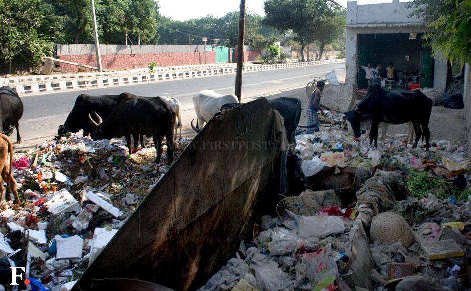 Photos Delhis cows and garbage stay put a month after Swachh Bharat Abhiyan