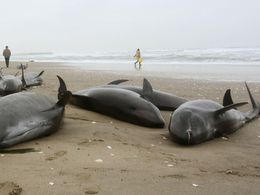Mumbai Environment Ministry clueless even as 10 dead dolphins wash ashore