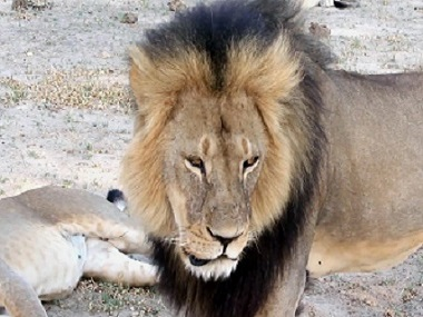 I have done nothing wrong, says hunter of Cecil the Lion