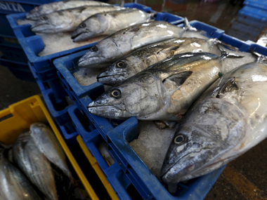 Something fishy! One-fifth of the seafood sold in markets is mislabelled