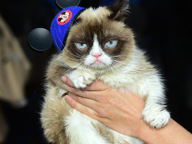 Grumpiest statue ever? Internet sensation Grumpy Cat to become wax figure at Madame