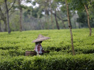 Tea exports to Pakistan to take a hit postPulwama terror attack exporters say business secondary