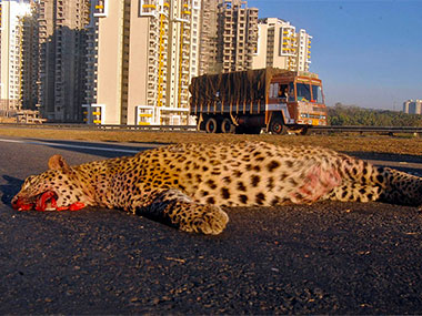 leopard-Conservation-India-380