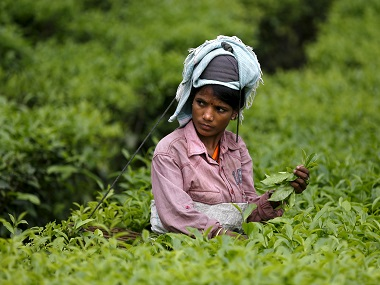 Speciality tea Tripura set to scale up white tea production after success of pilot projects a kg fetches a record Rs 10000 a kg