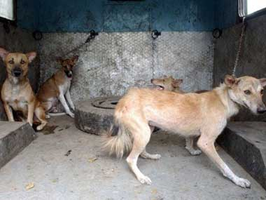 Rabies is just one reason why stray dogs are a snarling menace in India