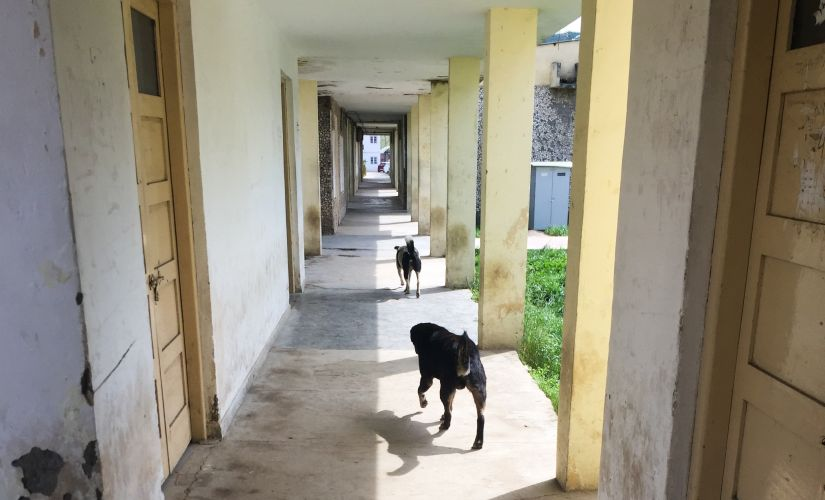 Stray dogs inside the campus. Sameer Yasir