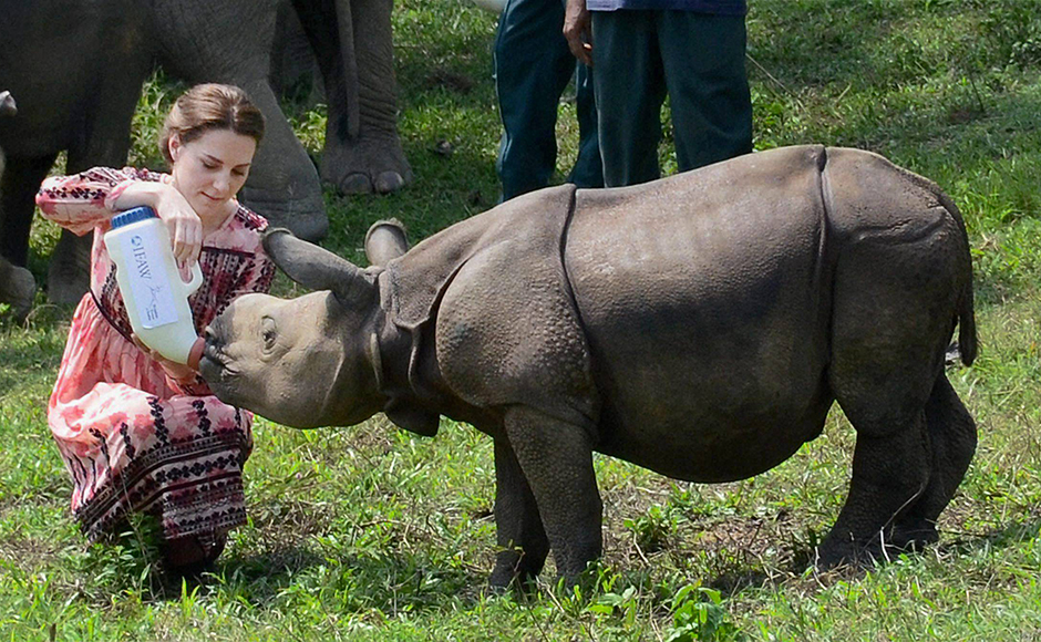 Catherine (Kate Middleton), Duchess of Cambridge, feeds a Rhino calf during a visit to the Centre for Wildlife Rehabilitation and Conservation (CWRC) near Kaziranga National Park, Assam on Wednesday. PTI Photo