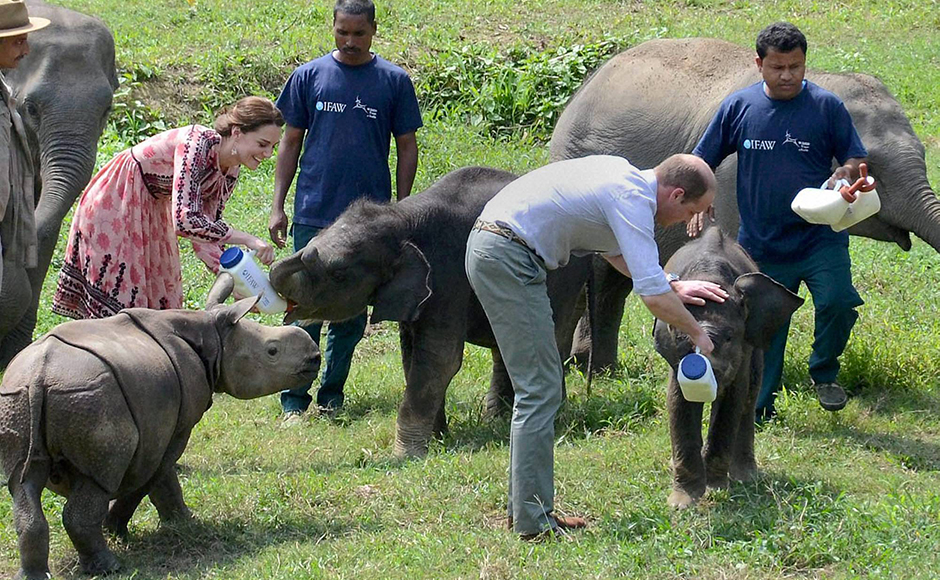 Prince William, Duke of Cambridge and his wife Catherine (Kate), Duchess of Cambridge feeding elephant calves during a visit to the Centre for Wildlife Rehabilitation and Conservation (CWRC) near Kaziranga National Park, Assam on Wednesday. PTI Photo