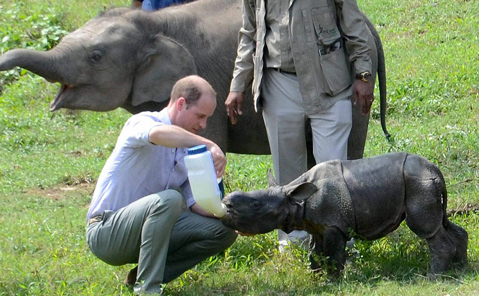 Prince William, Duke of Cambridge feeds a Rhino calf during a visit to the Centre for Wildlife Rehabilitation and Conservation (CWRC) near Kaziranga National Park, Assam on Wednesday. PTI Photo