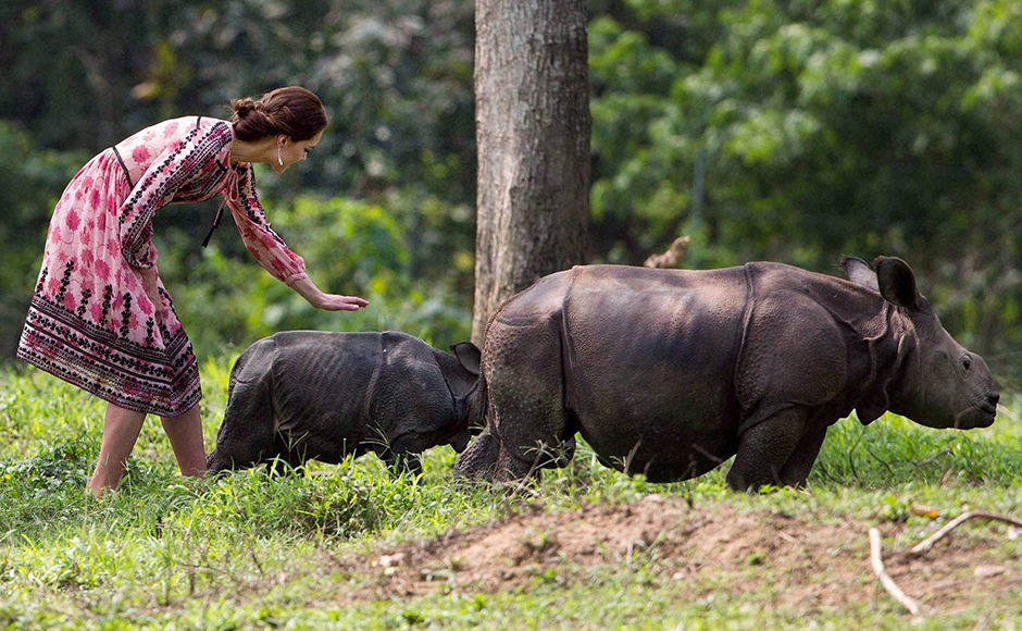 Kate, the Duchess of Cambridge prepares to touch a Rhino calf during a visit to the Centre for Wildlife Rehabilitation and Conservation (CWRC) near Kaziranga National Park, Assam on Wednesday. PTI Photo