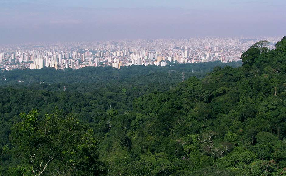 Going green Govt to create urban forests in 200 cities and towns across India