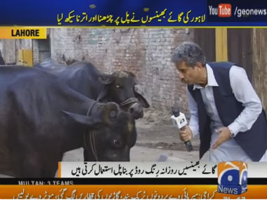 Pakistans Dr Dolittle Reporter in Lahore interviews a buffalo gets an interesting answer