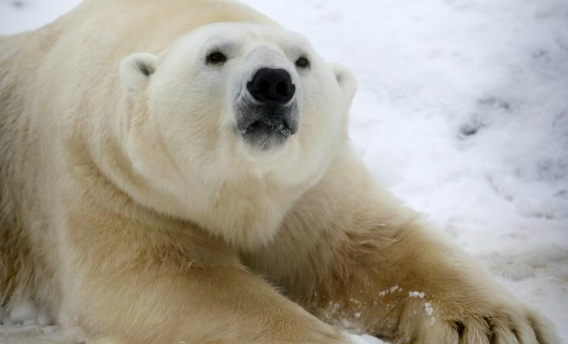 Russian scientists trapped by polar bears receive emergency supplies