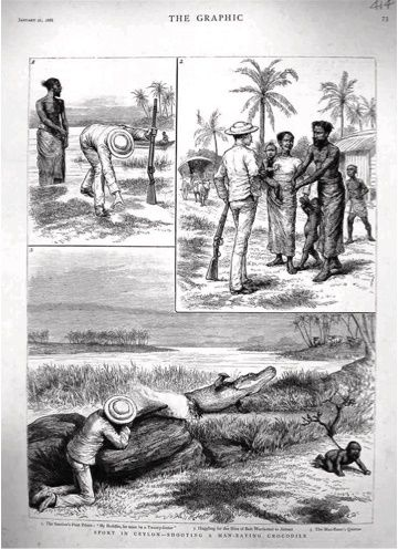 The set of three illustrations published in The Graphic, 21 January 1888. Courtesy De Silva and Somaweera.