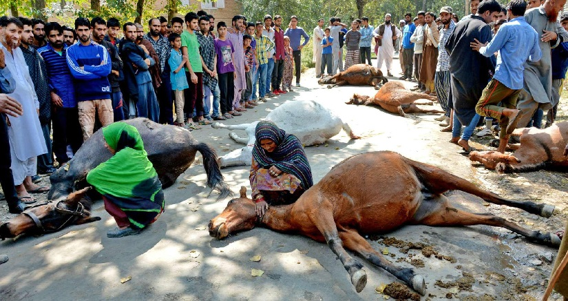 Nomads mourn their killed horses. Image courtesy: Facebook