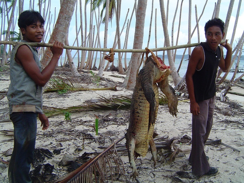 On the Andaman and Nicobar Islands humans and crocodiles are locked in a conflict