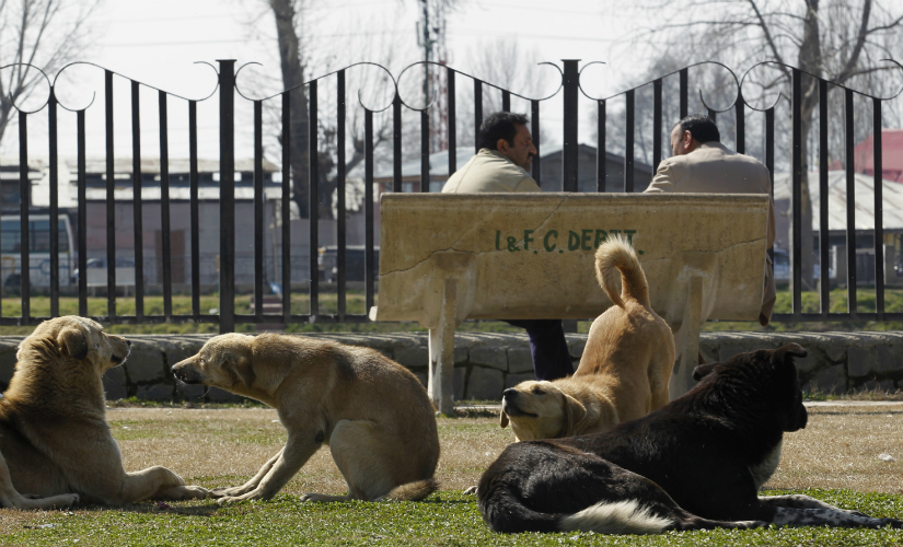 How did we end up in this mess twenty years after implementing a 'humane' dog control programme? Reuters