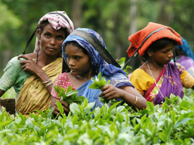 A tea garden in Assam. AFP