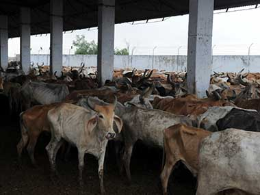 Cows are often kept in unclean, crowded sheds. Representational image. AFP