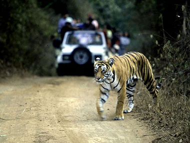 Similipal tiger reserve in Odishas Mayurbhanj lost 75 tigers in 12 years says states wildlife society