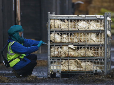 Bird flu detected in Daman poultry items banned for a month