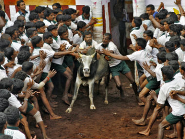 Jallikattu protests are really about Tamil masculinity not tradition or preservation of bull species