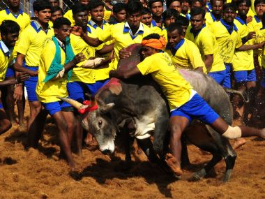 SC to refer to constitution bench for pleas challenging state laws for Jallikattu in Tamil Nadu, Maharashtra