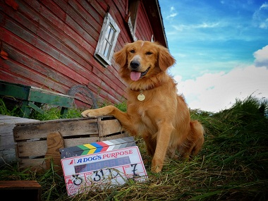 A still from the shooting of A Dog's Purpose. Twitter
