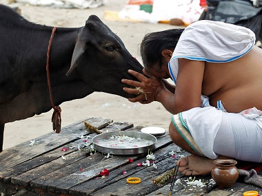 Aadhaar cards for cows to cost govt Rs 148 crore: Is it a joke or are Narendra Modi's priorities really off?