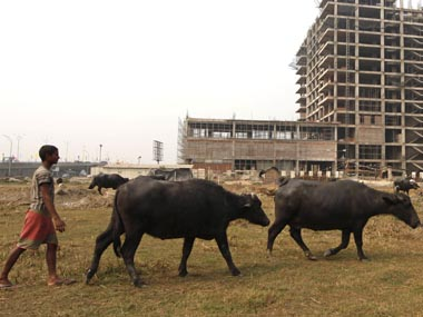 Cattle slaughter ban Buffaloes likely to be removed from list after stiff opposition from states