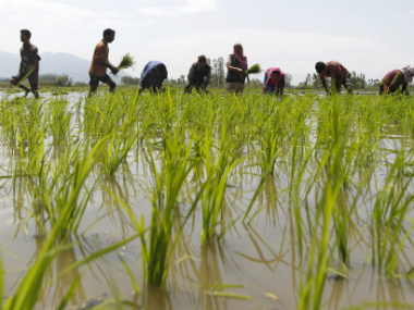 Minimum support price hike for kharif crops higher than last year, but still modest: Nomura