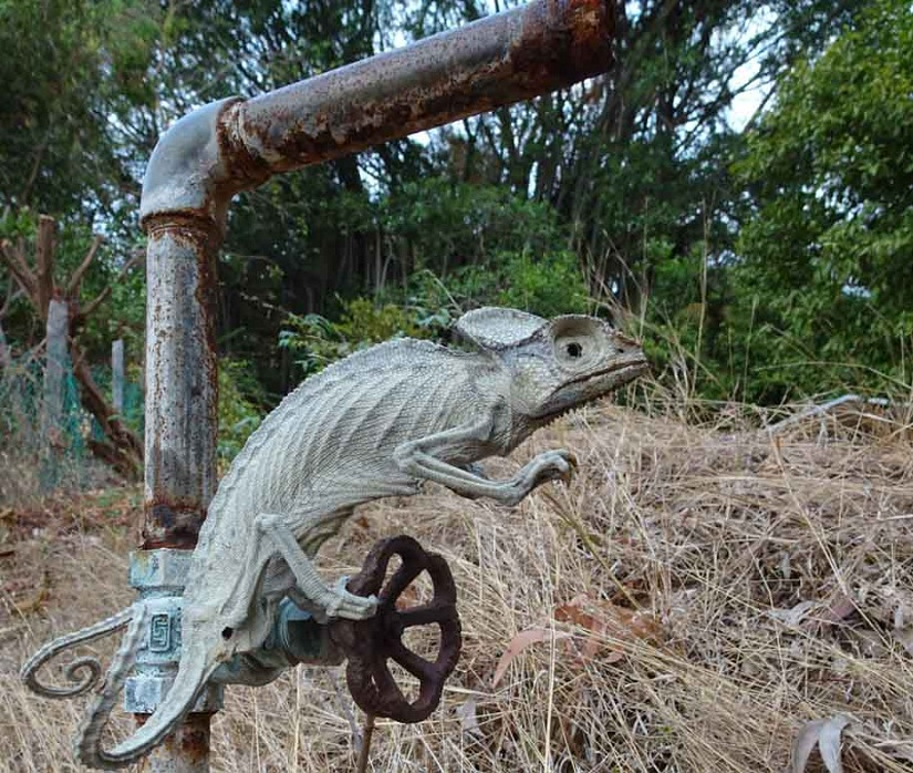 The story of a chameleon What could the death of a reptile tell us about drought and its species