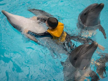 Whales and dolphins have complex relationships, human-like 'cultures': Study