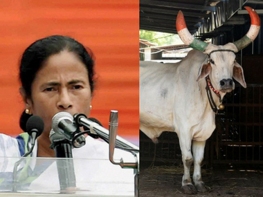 Mamata Banerjee govt to distribute cows to families ahead of West Bengal's 2018 panchayat election