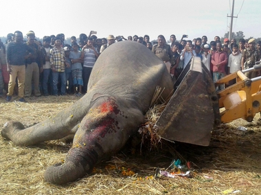 Guwahati-Naharagun train hits herd of seven elephants in Assam; five tuskers killed