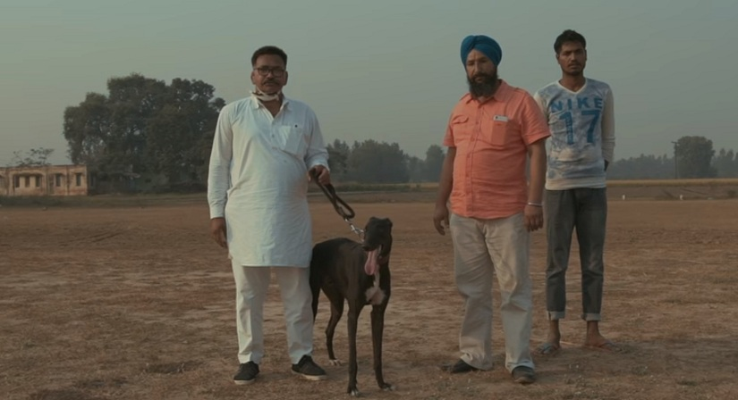 Watch A deep dive into the machismodriven world of greyhound racing in Punjab