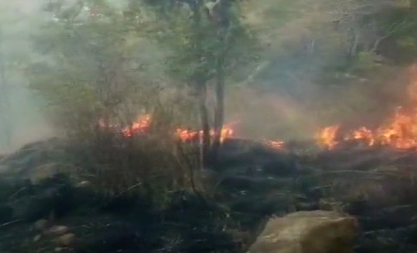 Theni forest fire nothing short of manmade disaster multitude of human errors likely behind tragedy that killed nine trekkers