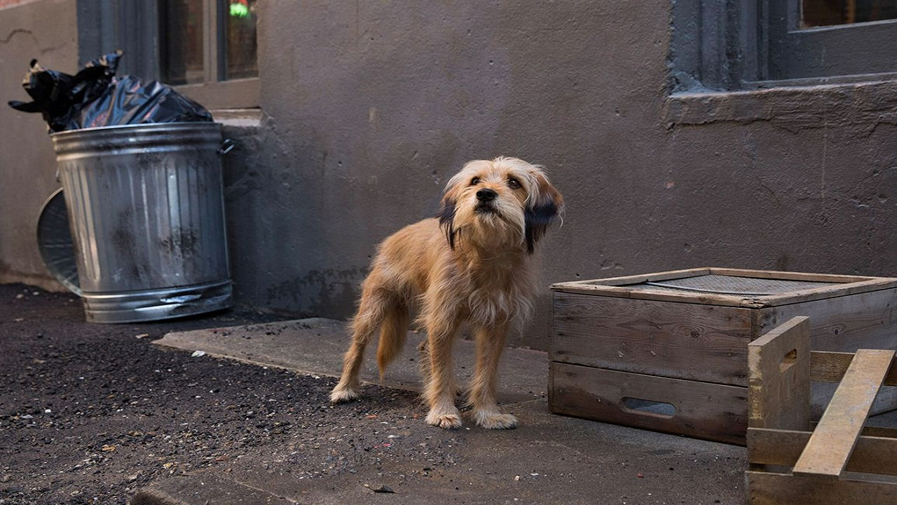 Benji movie review Simplicity and warmth of Brandon Camps film makes the adorable dog a protagonist to root for