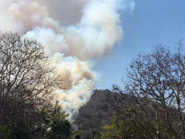 Fire in Karnatakas Bandipur reserve that destroyed acres of forestland has been contained say activists