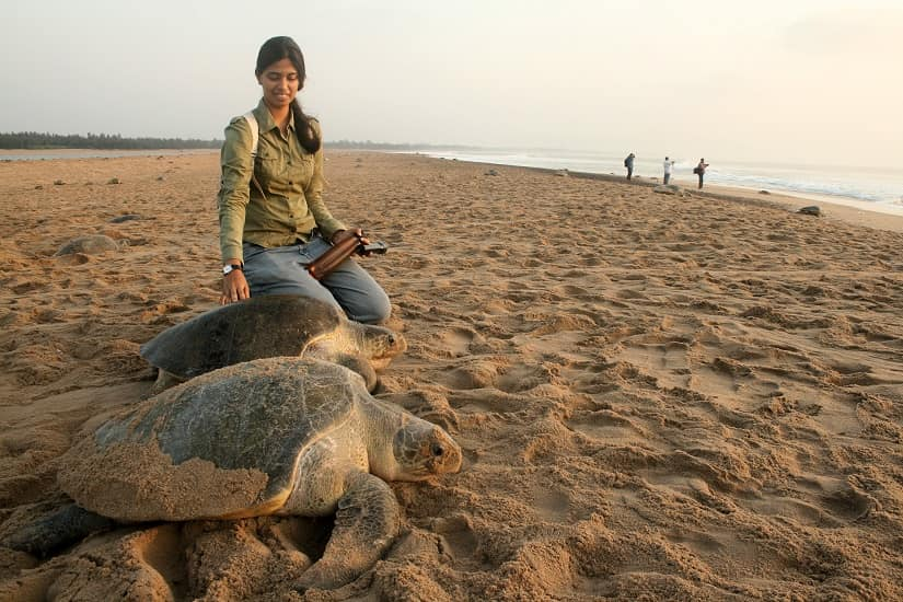 Marine ecologist Divya Karnad 2019 Future of Nature awardee on working towards sustainable fishing