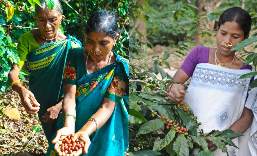 Araku coffee a brand from the Eastern Ghats that won acclaim in France is making its way home