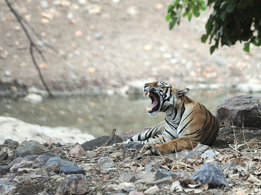 The striped mystery of Gujarat