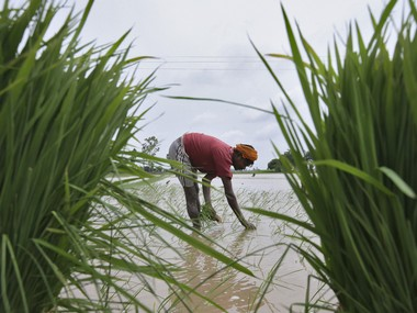 Rice exports likely to hit sevenyear low on weak demand from African countries higher prices say industry officials