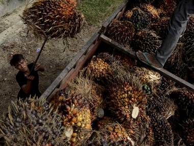 Malaysia aims to resolve palm oil trade dispute with India within a month to send a delegation soon to improve ties